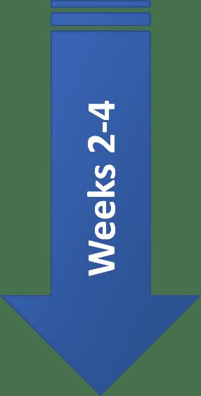 Weeks 2-4